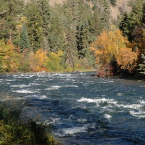 Fly fishing in Colorado Fall