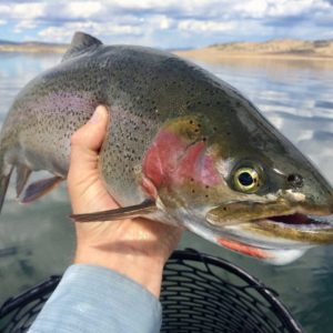 fly fishing colorado lakes